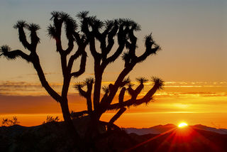 Mojave Sunset print