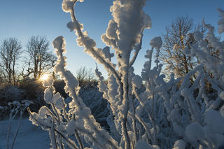 Hoar Frost and Sun print