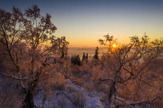 Frosted Sunset