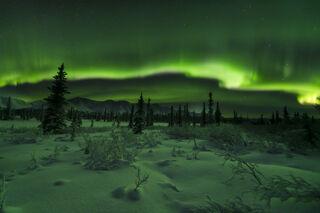 Spruce and Aurora print