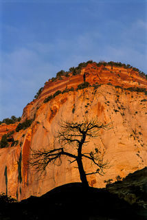 Zion Tree print