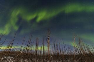 Aurora Adventure in the Alaskan Interior
