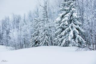 Fresh Snow print