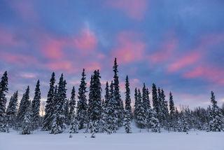 Sweden, landscape, winter