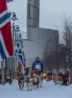 Finnmark, Finnmarksløpet, Norway, dog mushing, race, winter
