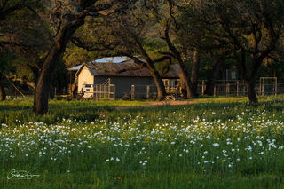 Flowers and Ranch House