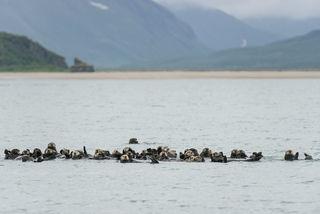 Otter Raft print