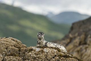 Alaska, Bristol Bay, Katmai National Park & Preserve, Katmai Wilderness Lodge, coastal, national park, summer, wildlife