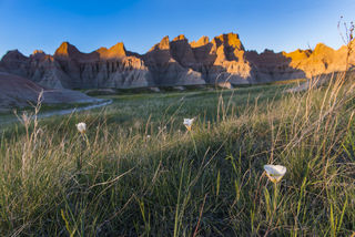 Badlands National Park, Sego Lily, South Dakota, Spring, landscape, national park, wildflowers