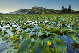 Alaska, Bristol Bay, Cook Inlet, Lake Clark National Park, Silver Salmon Creek Lodge, summer