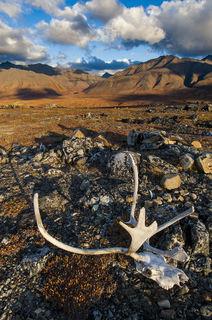 Alaska, Anaktuvuk Pass, Autumn, Gates of the Arctic National Park & Preserve, rural, subsistence