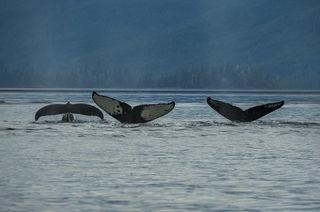 Alaska, Southeast Alaska, Wrangell, coastal, summer