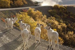 Alaska, Autumn, Denali National Park & Preserve