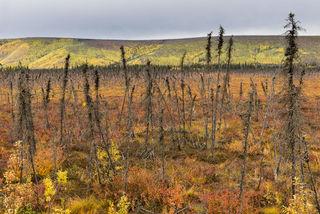 Twiggy Forest print