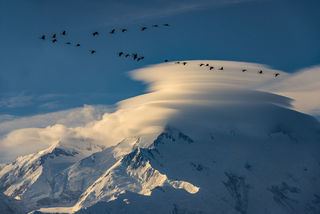 Autumn, Denali, Denali National Park, Sandhill Cranes, clouds, lenticular, migration, migratory birds, mountain, wildlife
