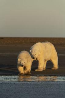 Arctic, Arctic National Wildlife Refuge, Autumn, Barter Island, Kaktovik