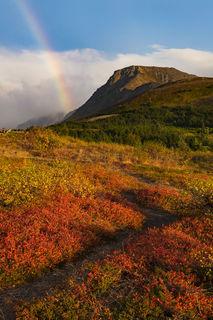 Rainbow and Alpine print