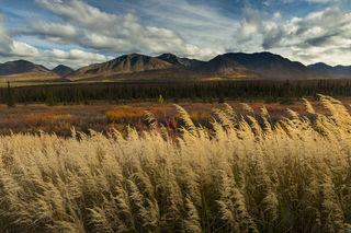 Grassy Autumn print