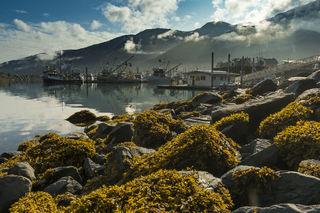 Harbor, waterfront, Alaska, coastal, summer, Whittier, morning