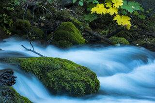 Chugach State Park, McHugh Creek, creek, forest, green, stream, water