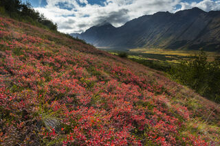 Alaska, Anchorage, Autumn, Chugach State Park, blueberries, hiking, mountains