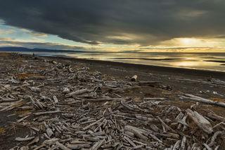 Driftwood Beach print