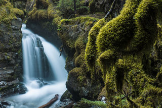 Moss and Falls print