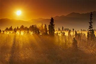Anchorage, film, fog, landscape, summer, sunrise, trees, woods