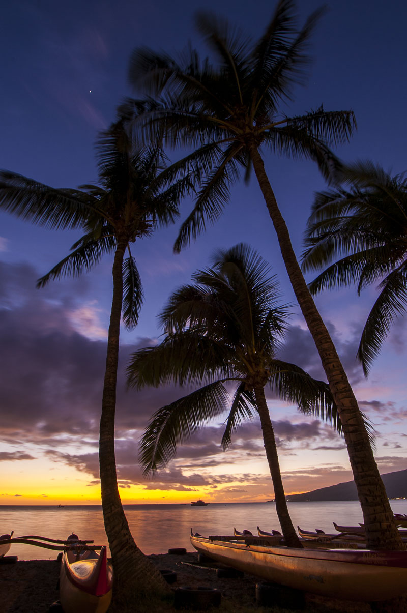A cluster of palm trees tower over some canoes on a beach at Kihei, Maui, as the colors of dusk fill the sky.