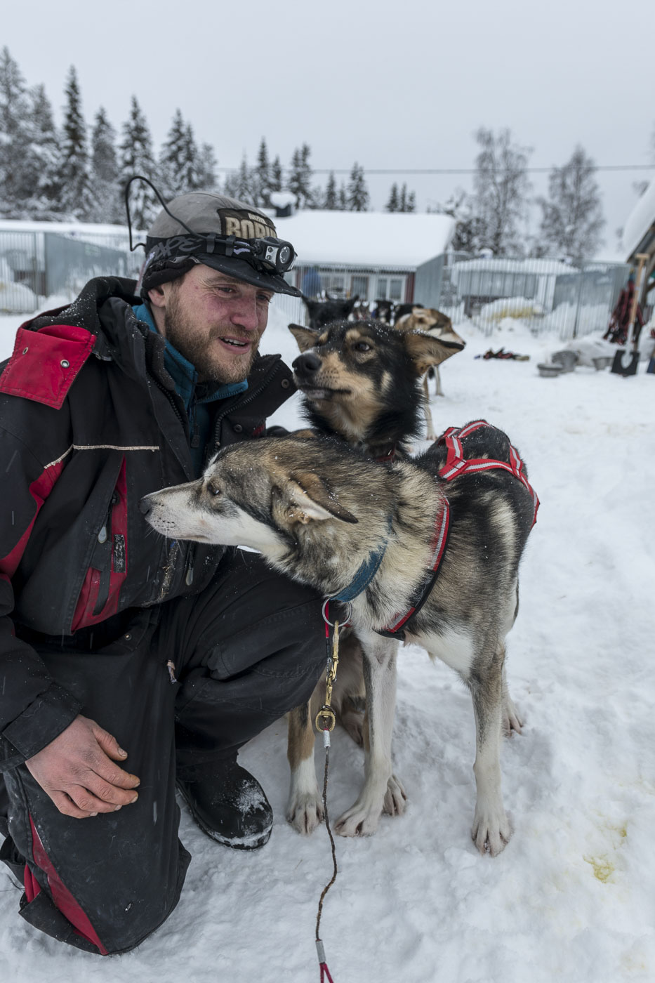 Petter Karlsson checks and pets his lead dog before a training run in the Vindelfjallen Nature Preserve, Sweden.