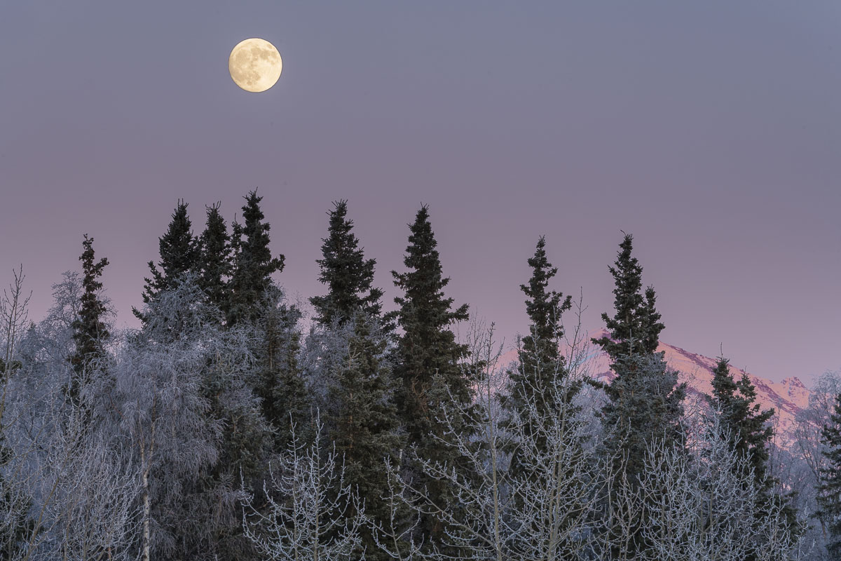A full moon rises over frosty trees in Anchorage.