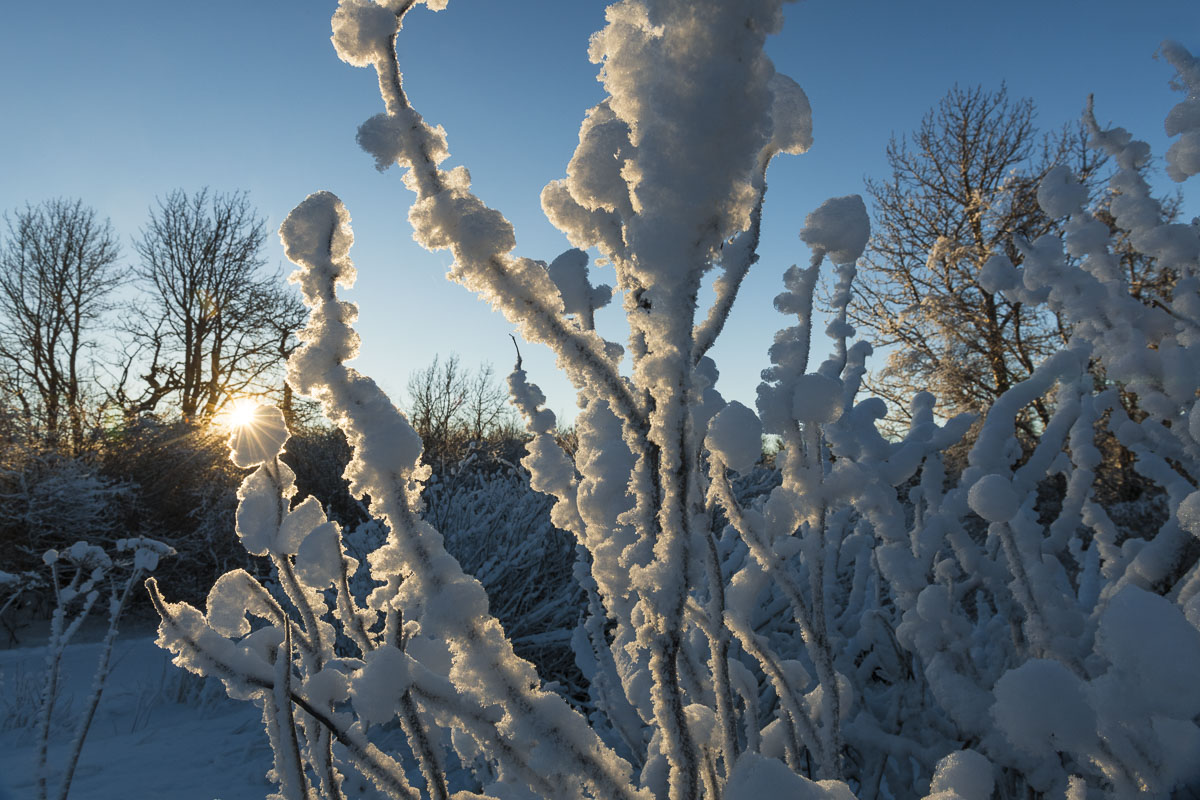 A mid-afternoon sun shines through thick hoar frost on brush in Kincaid Park in Anchorage.