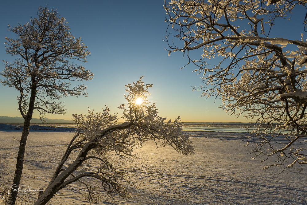 Afternoon sun shines through hoar frost-coated trees along the bluff in Kincaid Park, Anchorage.