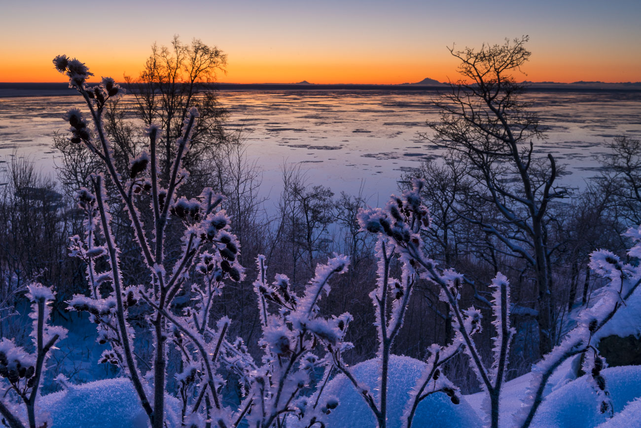 Hoar frost coats a small patch of alder as the colors of dusk light the sky over Cook Inlet, with Mt. Iliamna and Mt. Redoubt...