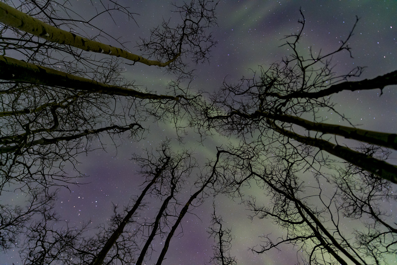 While heading back home after a long night of aurroa chasing, I came upon a grove of twisted aspen trees. I studied them for...