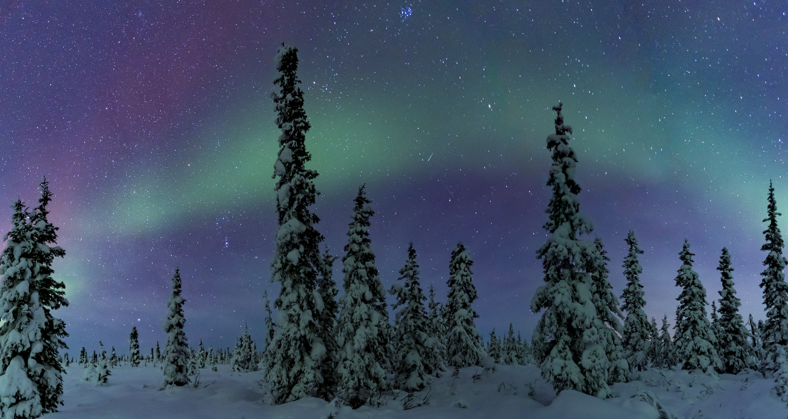 I was really attracted to this cluster of trees in a frosted forest near the Glenn Highway north of the Matanuska Valley in Alaska...