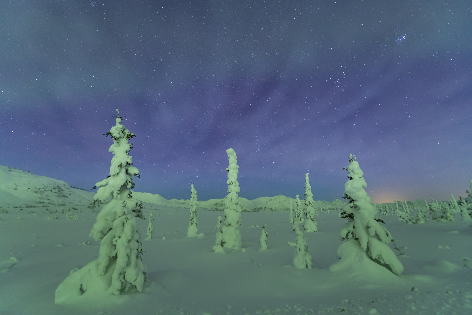While the northern lights were dancing behind me, I really wanted to photograph this cluster of trees that were thick with frost...