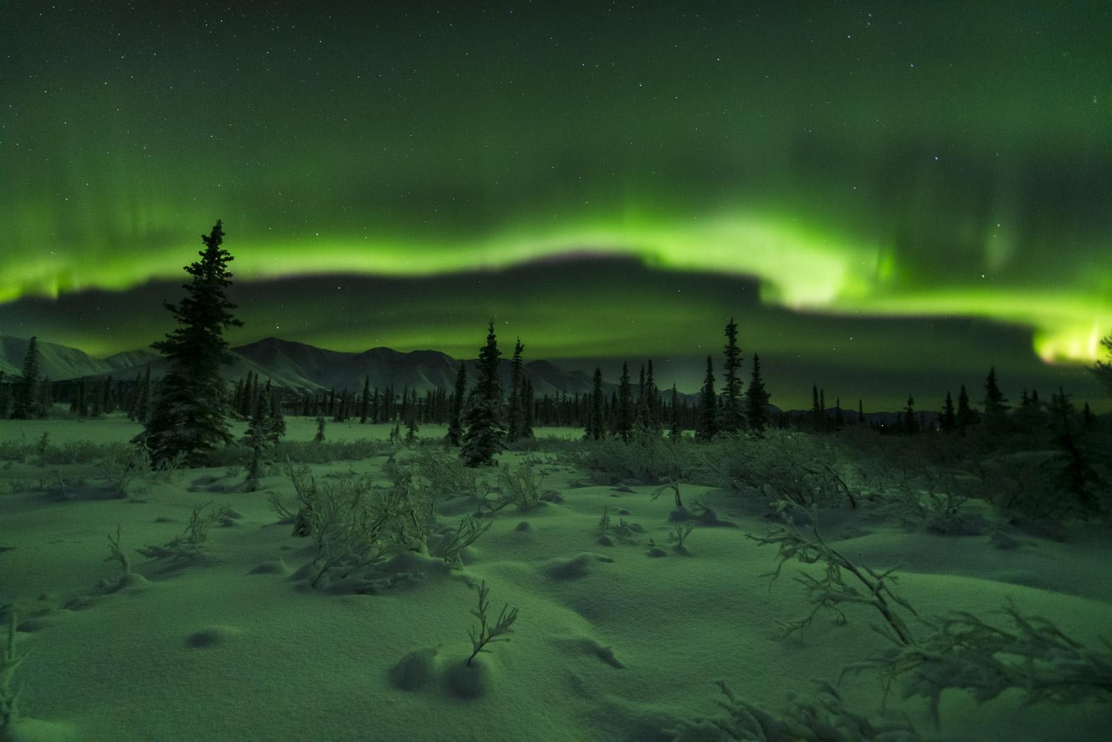 Spruce and Aurora