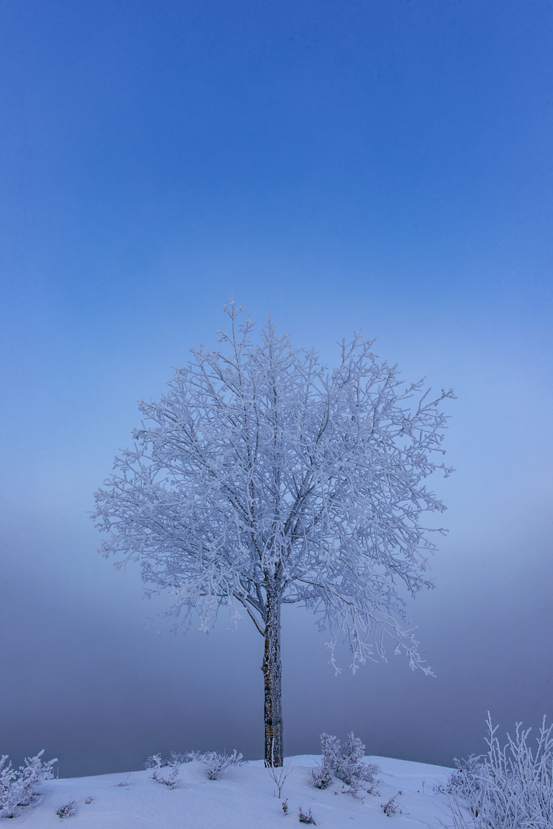It is a fairly common event in Anchorage winters in January to have a few days of cold, calm conditions where ice fog blankets...