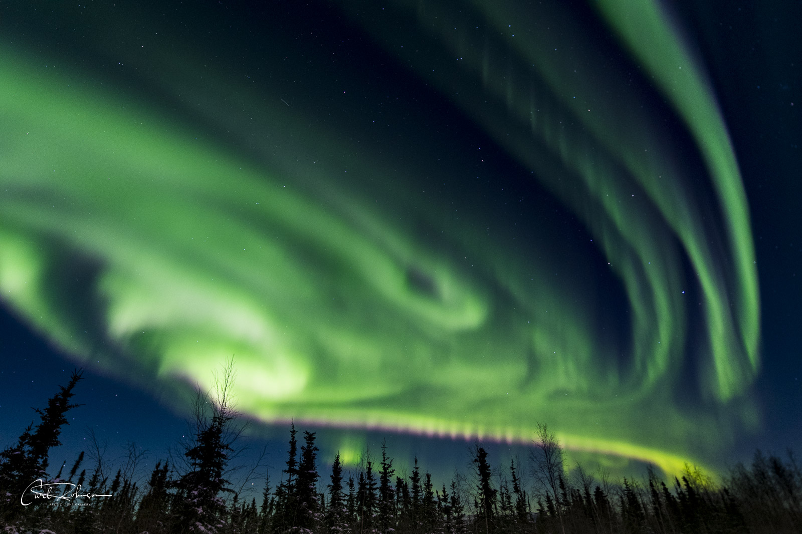 An active aurora borealis display fills the sky over some spruce trees near the beginning of the Dalton Highway.