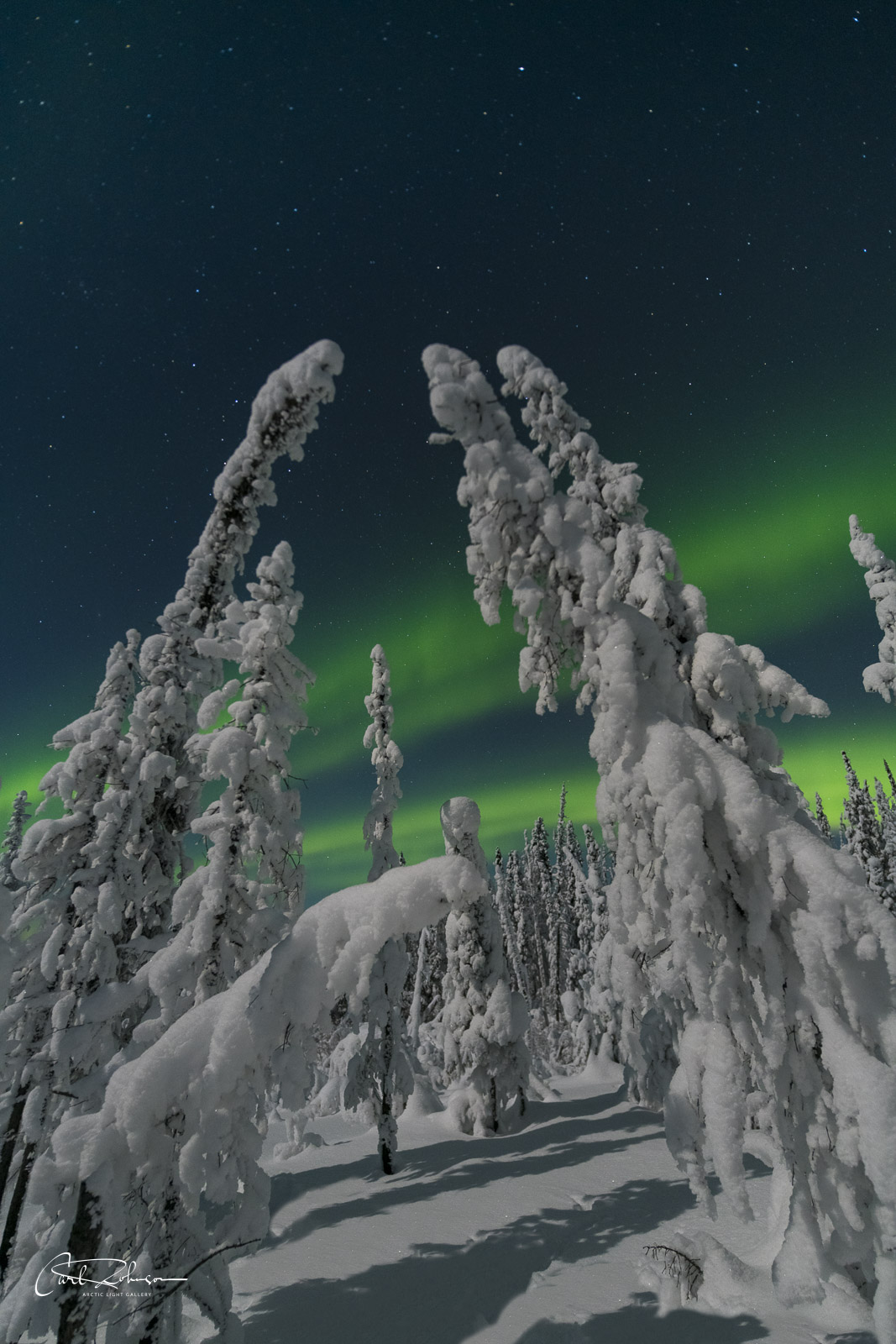 The aurora borealis soars behind a cluster of snowy trees that look like something from a Dr. Suess story.