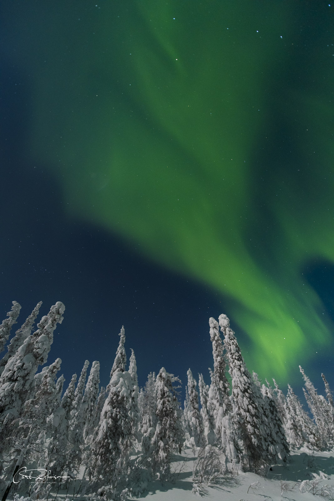 The aurora borealis dances over a cluster of snowy trees.