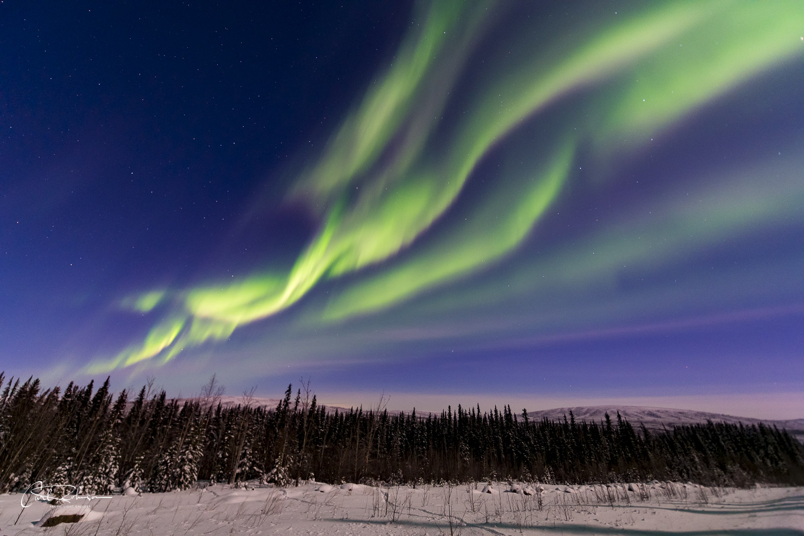 Several active, moving layers of the aurora borealis fan across the sky over some trees along the Dalton Highway.