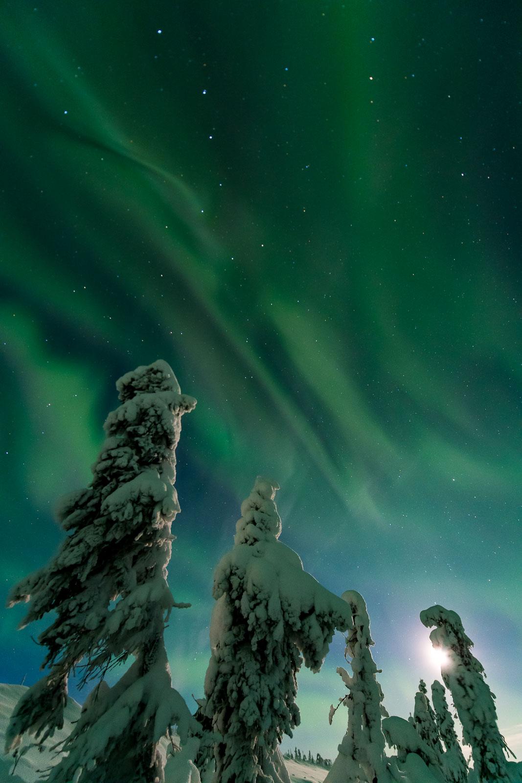 The aurora borealis floats over snowy trees along the Dalton Highway.