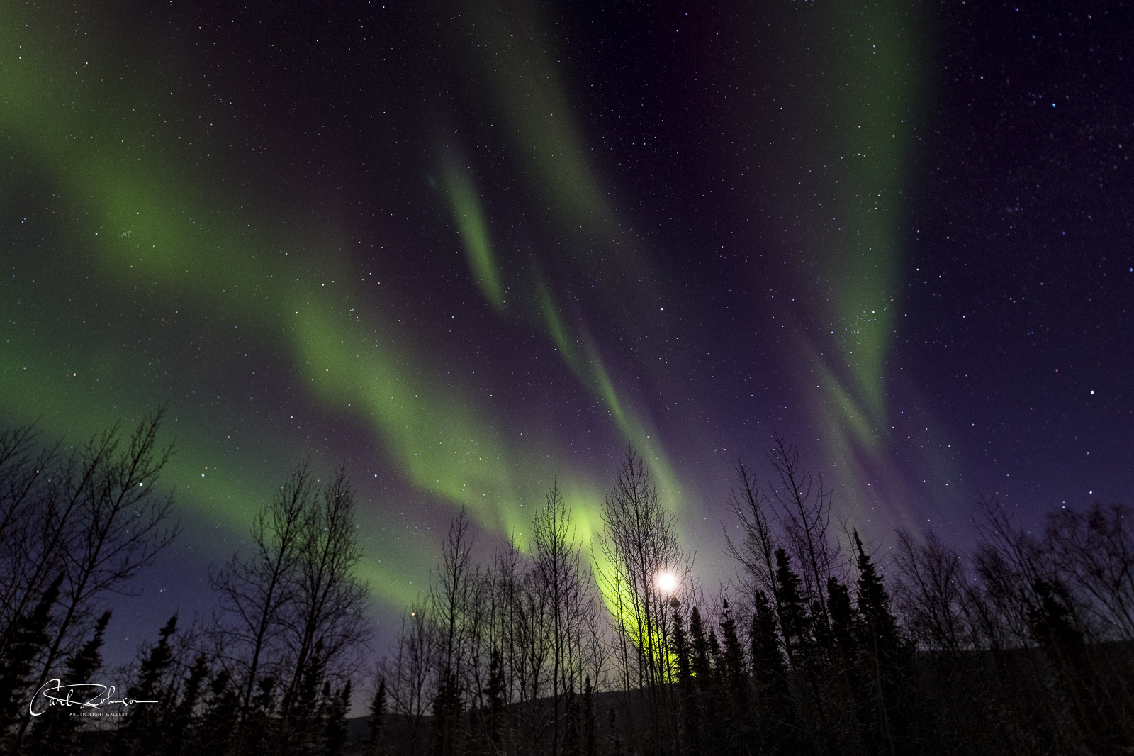 The aurora borealis fans across the sky, shining with the moon through a cluster of trees.