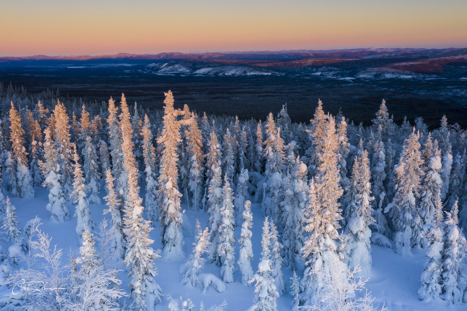 A cluster of snowy trees catch the last light of the evening.