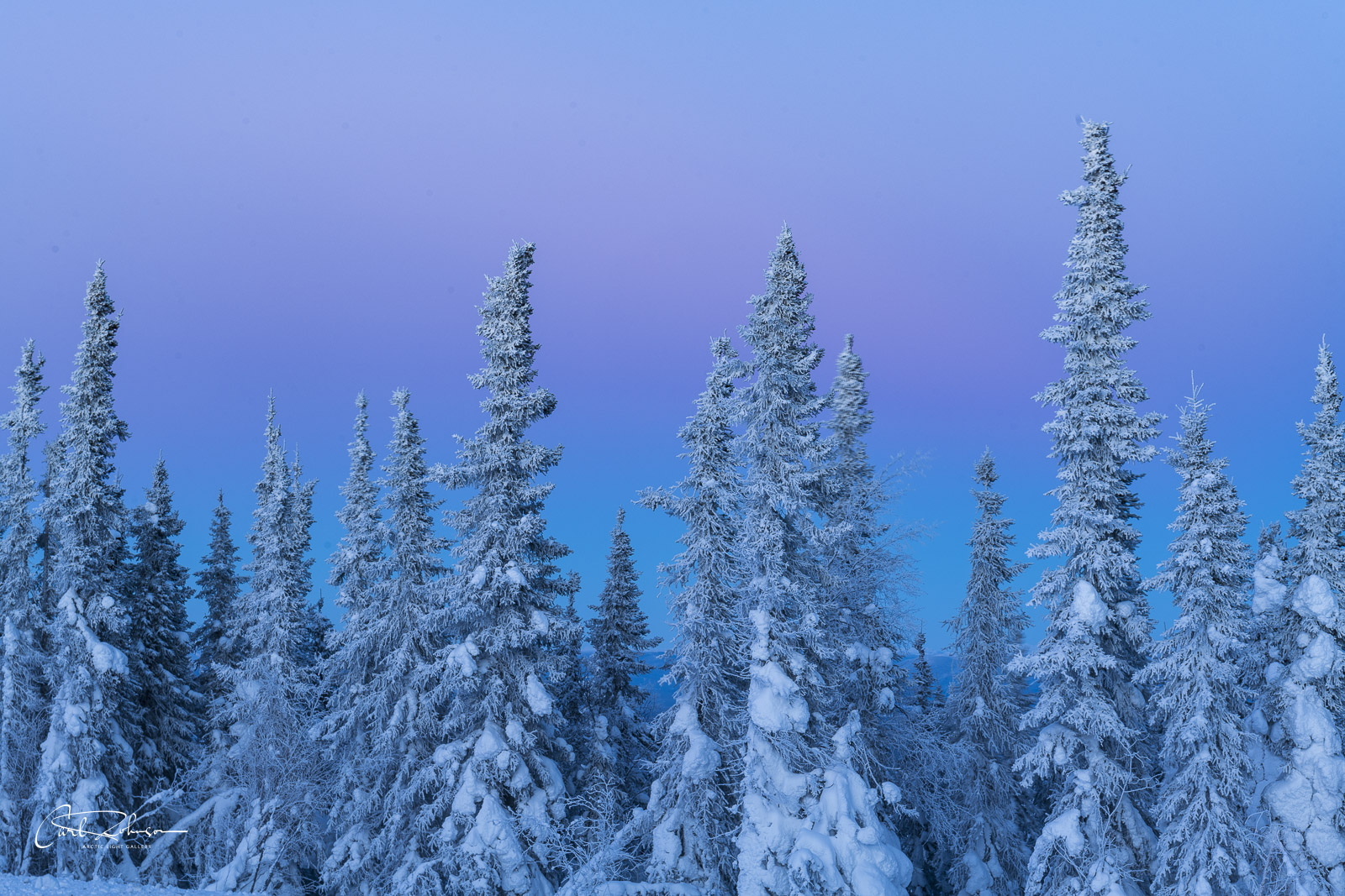 The pastel colors of dusk fill the sky behind a cluster of snowy trees.
