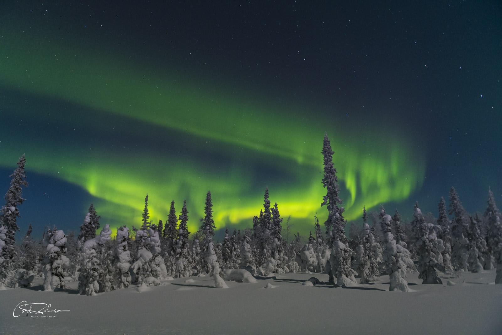An early aurora borealis dances over snowy trees along the Elliott Highway in Alaska.
