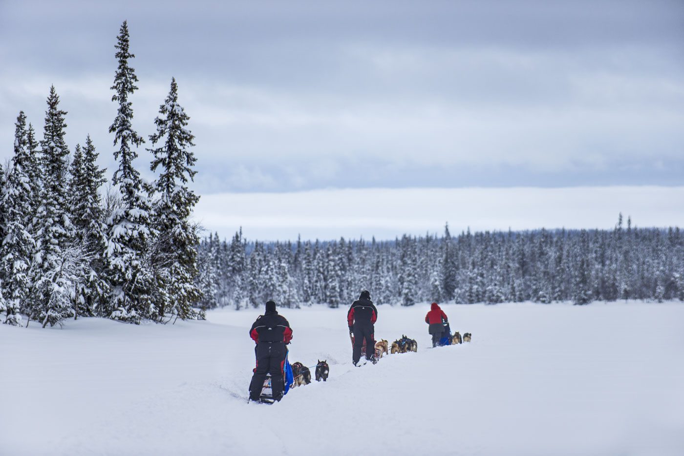 Participants in a multi-day dog mushing tour through the Petter Karlssons Sleddogs Kennel head out into the Vindelfjallen Nature...