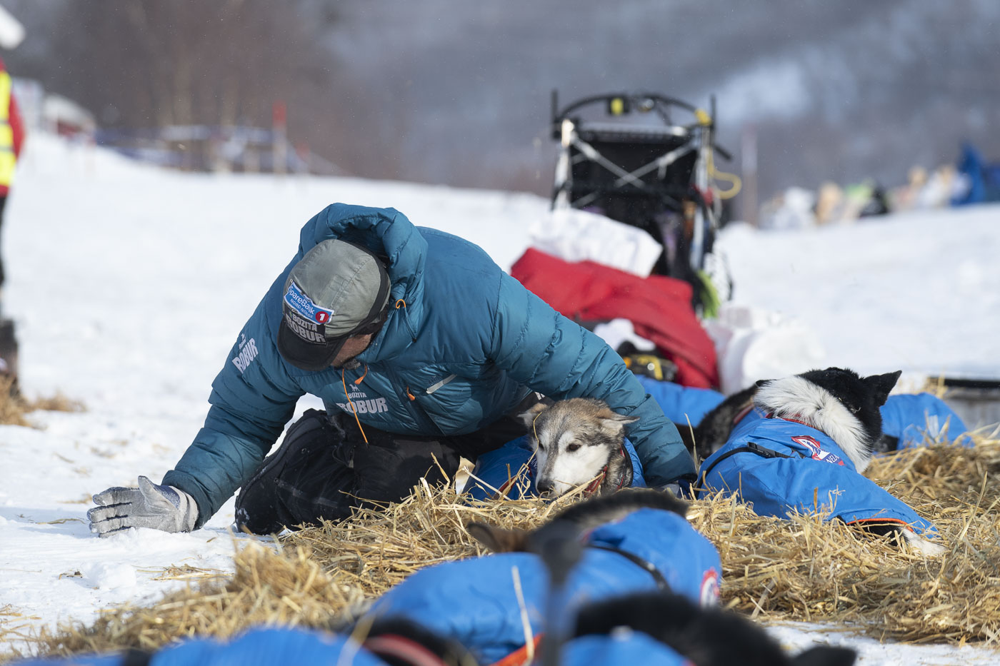 Petter Karlsson scoops up snow to apply to an inflamed tendon for one of his dogs at a checkpoint.